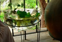 Watergardens & Terrariums