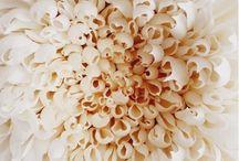 Blanc/beige