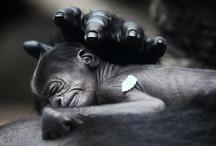 Primates / by Valerie Pettit