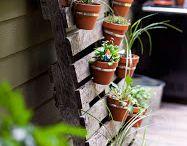 Herb/Veggie garden