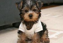I love puppy ♥