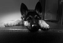 Canine Love