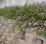 Garden - Flower Bed Ideas / by Karissa Stucki