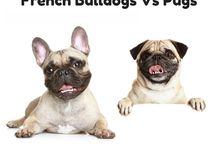 Buldogue vs Pug