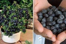 kweken vruchten