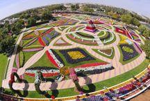 Fiori & Flowers / Flowers around the World :)