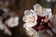 Natur / Blumen, Blüten, Pflanzen, ...