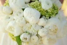 Bloemen & boeketten