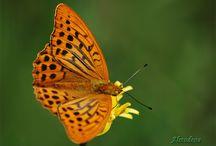 Fotografía / Fotografía de Naturaleza y otros temas. About Nature photography and other things.