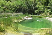 "Natural pond ""swimming pool"""