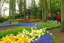 Keukenhof, Tulip, My Inspiration / Keukenhof, Lise, Netherlans