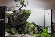 aquários e terrários