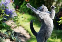 """Cats - what can I say? / """"There is nothing more delightful than grown cats at play. They are so swift, light, graceful, and yet richly comical""""  TS Elliot.         Graceful, mysterious, beautiful creatures."""