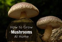 How to grow at home?