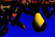 Spaziergang durch meinen Garten / Wenn ich durch meinen Garten spaziere nehmen Früchte, Blätter, Blumen plötzlich ganz neue Formen und Farben an. Diese andere Sicht verzaubert mich. Mehr Bilder findet man hier: http://www.schwanfelder.info/ein-spazier