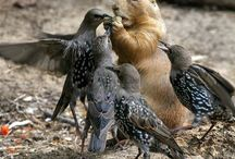 wiewiórki i gryzonie