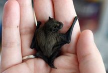 Bats! / by Jessica Townsend