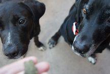 Fostering dogs and cats / Fostering dogs and cats