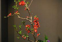 Deco plants / Flowers, vases, gardens