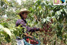 Productores y Trabajadores de Comercio Justo - Fairtrade
