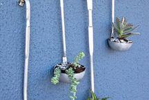 растения , балкон, сад