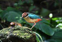 5 Manfaat Bekicot Untuk Burung Kicau Lengkap dengan Cara Penyajian