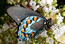 butterflies and moths / by Ron Moyers