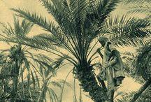 Arty Palm House 17.