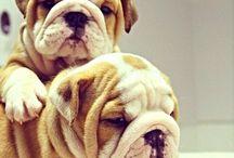 Dog love / Animales