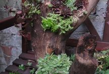 Tronco De Arvore Jardim