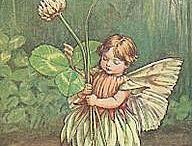 Fairies / Blumenelfen