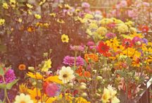 Wild flowers, nothing like a carpet of wild flowers with an array of beautiful colours.