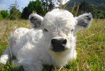 ✦Farm Animals Love Vegans✦ / Cute farm animals