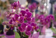 Flori,plante
