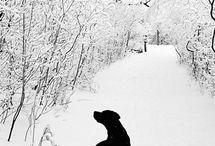 I love Animals / by Jennifer Lama