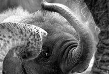 ELEPHANT LOVE!!!