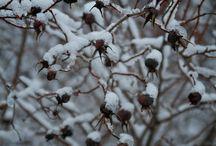 Kar çiçekleri / Winter time