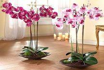 Цветы домашние