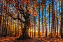 Tree Fantasies / by Tai Goodwin