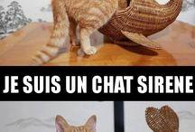 chat sirène