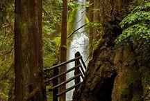 Skogstrappa