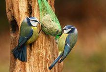 Vögel immer füttern