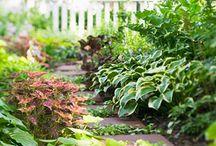 Gardening-Shade