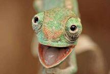 Reptiles / Lizards, snakes etc