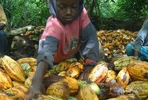 Chocolate and Child Slavery / Child Labor and Child Trafficking in the cocoa bean fields in West Africa. www.changetheworldbyhowyoushop.com