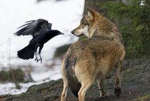 Nature and Animals