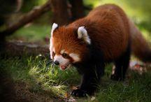 Animales 1080p / Fotos-pics-Walls Animales Full HD 1080p