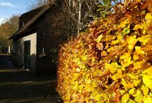 Giethoorn lodge