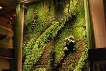 Vertical Garden decor