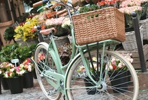 cute bikes / by Norma Iverson